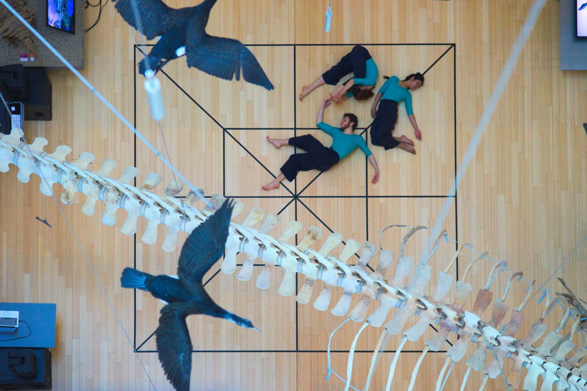 Genoma scenico / Nicola Galli / TIR Danza / MUSE / Trento